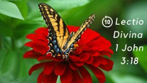 A butterfly on a red flower